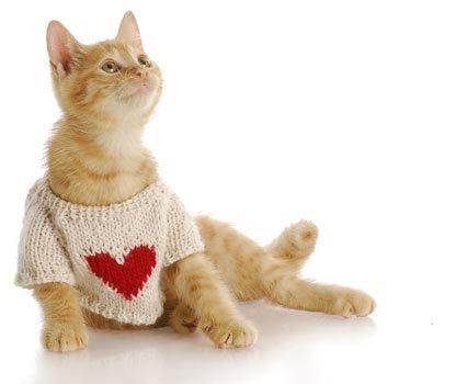 orange kitten wearing a sweater