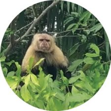 monkey on the Monkey Island Tour, Gamboa, Colón, Panama