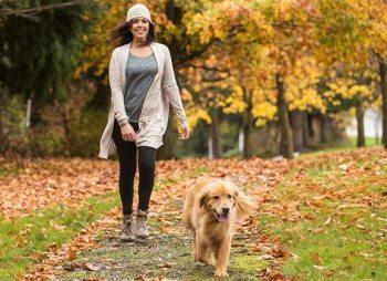 dog walking in autumn