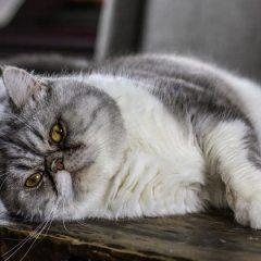 5 tips to avoid pet obesity