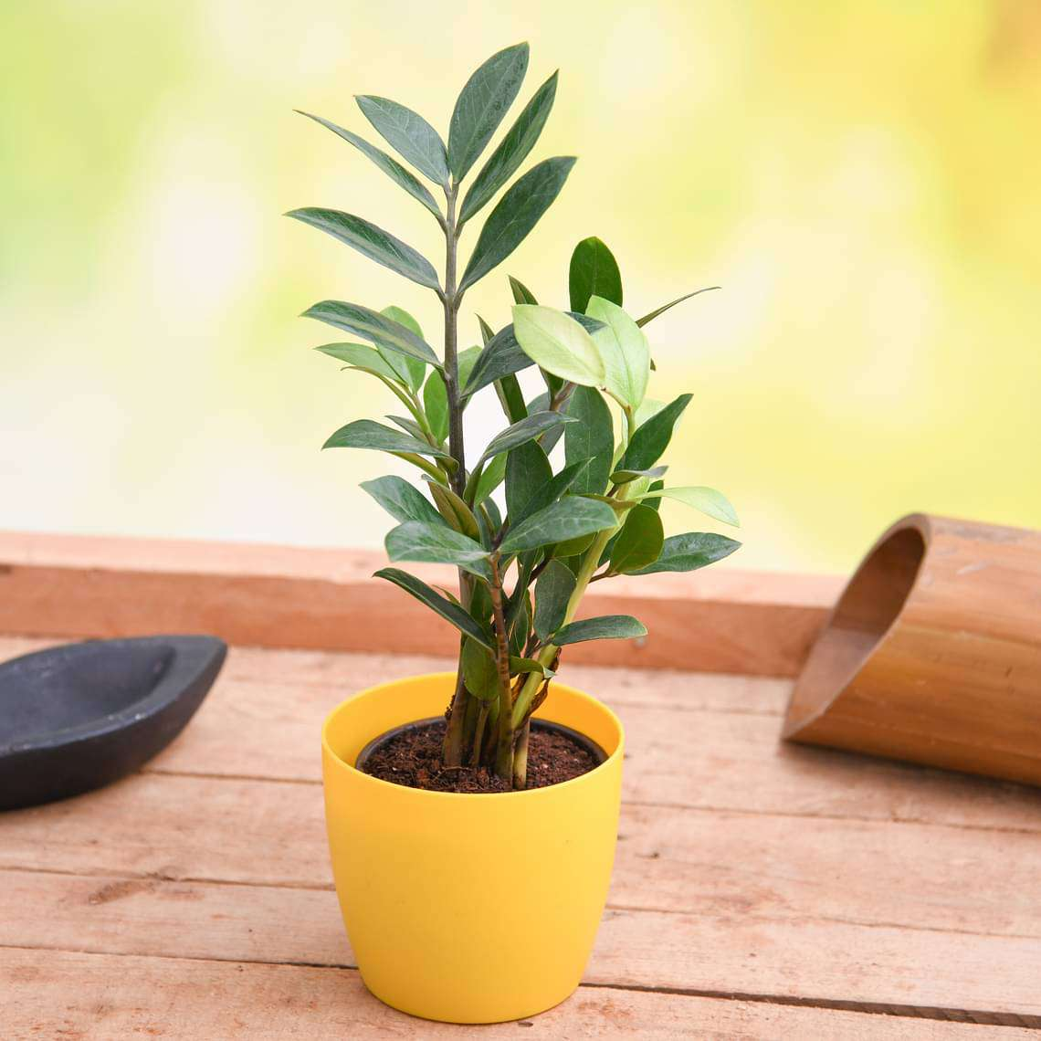 E for 10 Easy to grow and manage houseplants in India