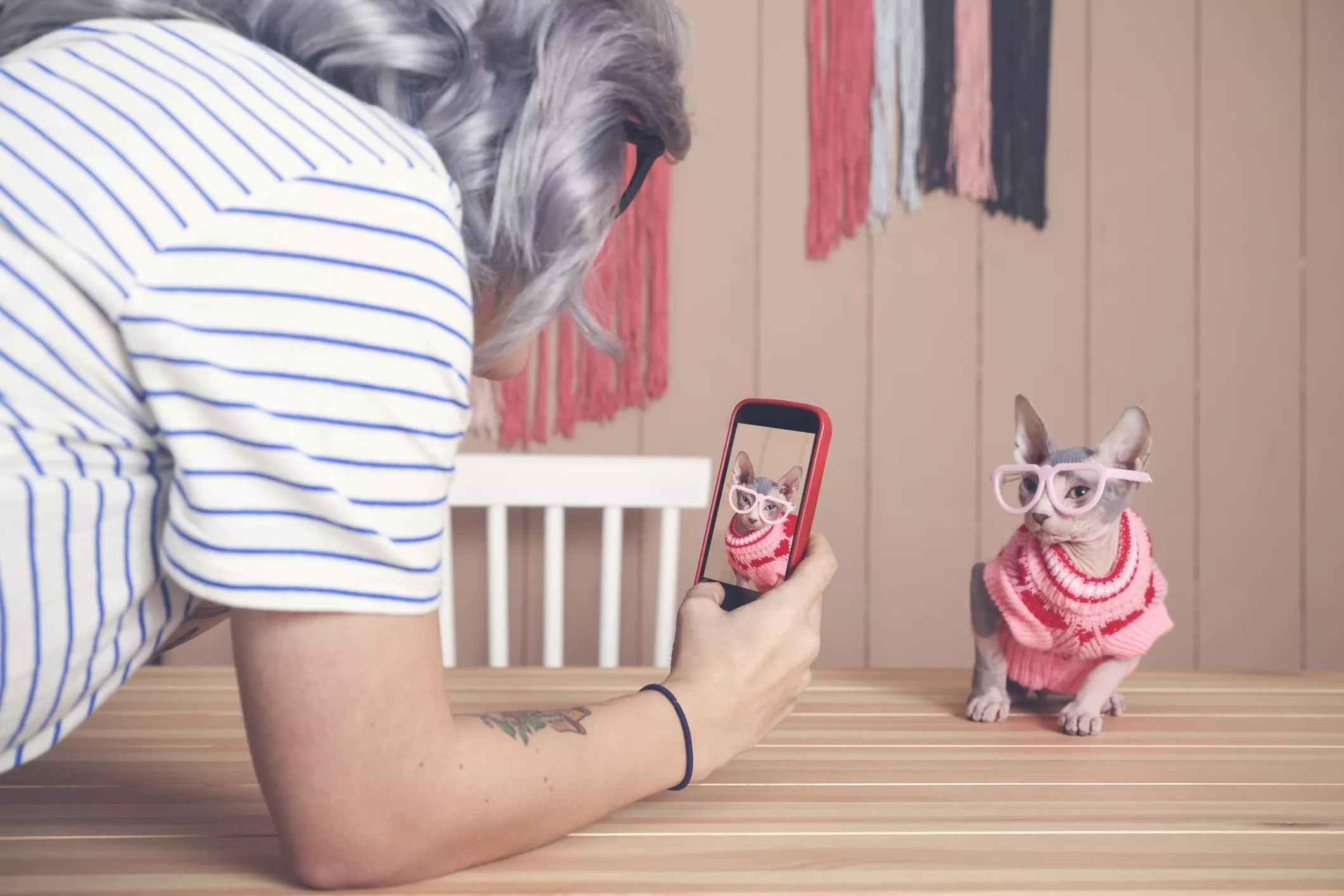 An image of a woman taking a photo of a dressed up cat with her smartphone.