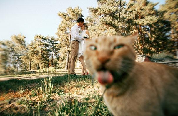 cats photobombed