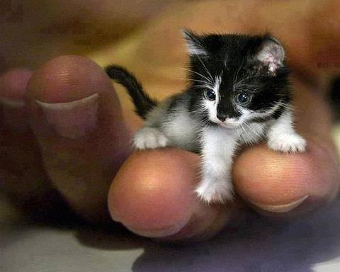 mr peebles smallest cat