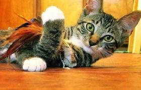catwtoy