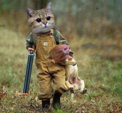https://i1.wp.com/www.lifewithcats.tv/wp-content/uploads/2013/01/cats.jpg