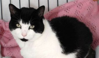 Two Happy Cat Rescue Stories Feature Stewart