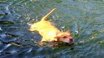 5.14.14 - Lucky Dog Survives Crocodile Attack2