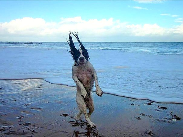 10 Perfectly Timed Photos of Dogs