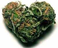 marijuana during pregnancy