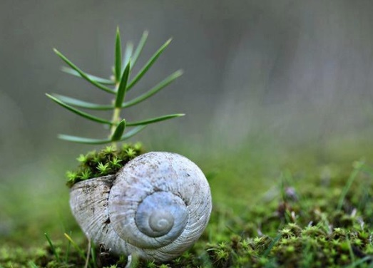 plant consciousness - image of a tiny tree sprouting from a snail shell