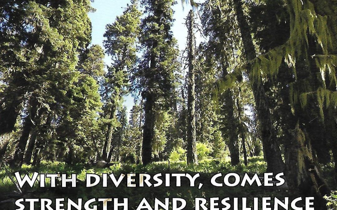With Diversity Comes Strength