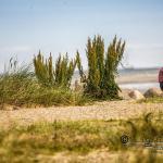 Kieler Woche 2015 335 - Die Toskana wartet ...... - besondere-portraets, abseits-des-alltags - Urlaub, Infos, Frauen, Die Geschichte hinter den Fotos