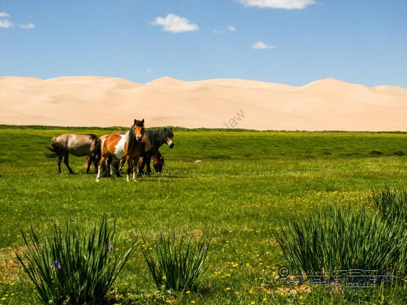 Mongolei 2003 100 - Mongolei 2003-100 - allgemein -