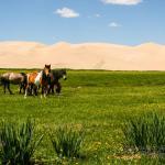 Mongolei 2003 100 - Die wilde Bestie ;-) - tierportraets, portraets, allgemein - Tierfotos, Hundeporträts, Hunde