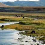 Mongolei 2003 11 - Corona-krise - aktuell nur nach Termin - status, rund-um-rodenbach, non-commercial, naturfotos, allgemein -