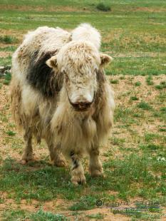 Mongolei, Gobi, Expeditionsfotografie, Abenteuer, Wüste, Mongolen, Mongolei – das Land der Unendlichkeit, Fotostudio Light-Style`s Blog