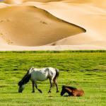 Mongolei 2003 151 - Dein Foto-- Klick und fertig? - allgemein - offene Worte, Infos, Allgemein