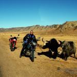 Mongolei 2003 25 - shadows & lights - allgemein, aktfotos - Geschenke, Frauen, erotische Porträts, Aktfotos