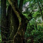 Deutsche Wüste 24 - sächsische Schweiz - traumhafte Natur - outdoor, naturfotos, natur-staedte-deutschland, natur, allgemein - Sachsen, Naturfotos, Deutschlands schöne Seiten