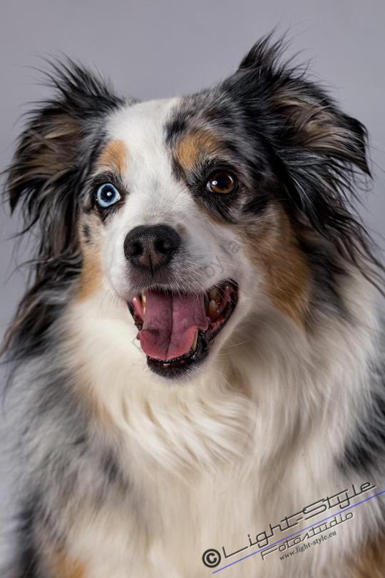 hundeportraets