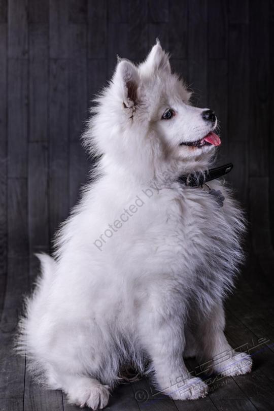 Hundeporträt Fila 13 - Hundeporträt - Fila-13 - tierportraets, allgemein -
