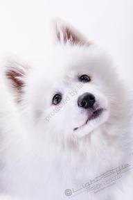 Hundeporträt - Fila-14