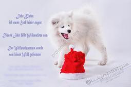 Hundeporträt - Fila-19