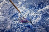 ein sicher gefangener Thunfisch, kurz bevor dann der nächste gehakte Thunfisch vom Orca attakiert wurde.
