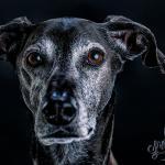 Tierporträt Carbon 2 - ggrr, geile pics und nix darf man zeigen ;-) - allgemein - Fotografenprobleme, Allgemein