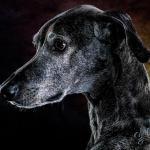 Tierporträt Carbon 5 - Unser Galerie-Shop für Euch ist endlich online - studio-infos, status, angebot-aktion, abseits-des-alltags - Shop, Rund ums Studio, Gewschenke