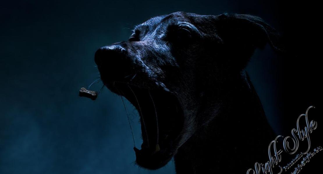 Tierporträt Carbon 8 - Von Kuscheltieren & Monstern ;-) - tierportraets, alles - Tierfotos, Hundeporträts, Geschenke