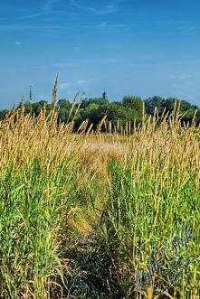 Rodenbach 2018 29 - Neues aus Rodenbach - rund-um-rodenbach, outdoor, naturfotos, natur, abseits-des-alltags - Tierfotos, outdoor, Naturfotos, Draußen, Deutschlands schöne Seiten