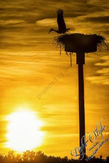 Rodenbach 2018 397 - Neues aus Rodenbach - rund-um-rodenbach, outdoor, naturfotos, natur, abseits-des-alltags - Tierfotos, outdoor, Naturfotos, Draußen, Deutschlands schöne Seiten