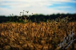 Rodenbach 2018 47 - Neues aus Rodenbach - rund-um-rodenbach, outdoor, naturfotos, natur, abseits-des-alltags - Tierfotos, outdoor, Naturfotos, Draußen, Deutschlands schöne Seiten