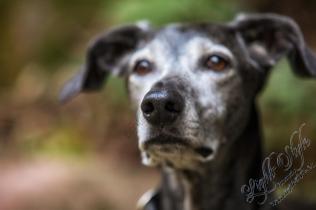 Hundeporträt outdoor-21