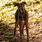Hundeporträt outdoor 22 - Ebayfoto-Standard oder das schnelle Produktfoto - fototips - Werbefotos, Tips, Produktfotos, Businessfotos