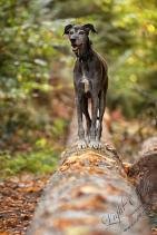 Hundeporträt outdoor-23