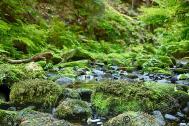 s%C3%A4chsische Schweiz Bastei 2018 169 - sächsische Schweiz - traumhafte Natur - outdoor, naturfotos, natur-staedte-deutschland, natur, allgemein - Sachsen, Naturfotos, Deutschlands schöne Seiten