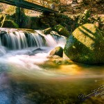 Gerolsauer Wasserfälle 128 - Hundeporträts - mehr als langweilige Fotos - tierportraets, portraets, allgemein - Tierporträts, Porträts, Hunde, Haustiere, Geschenke