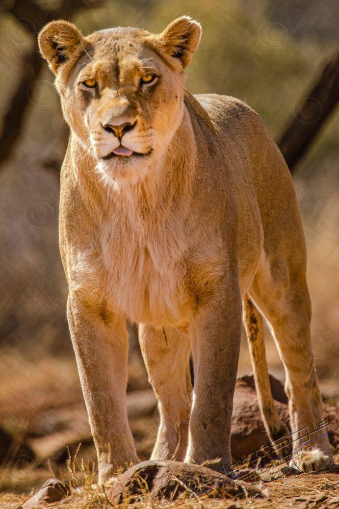 Südafrika 2019 1208 800x1200 - Afrika - Ein Traum wurde wahr - urlaubsfotos, outdoor, offene-worte, non-commercial, naturfotos, natur, allgemein, alles, abseits-des-alltags -