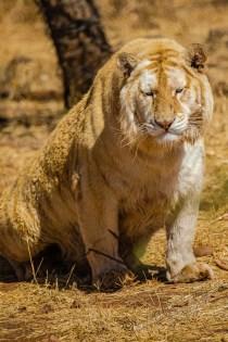 Südafrika 2019 1228 - Afrika - Ein Traum wurde wahr - urlaubsfotos, outdoor, offene-worte, non-commercial, naturfotos, natur, allgemein, alles, abseits-des-alltags -