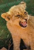 Südafrika 2019 1468 - Afrika - Ein Traum wurde wahr - urlaubsfotos, outdoor, offene-worte, non-commercial, naturfotos, natur, allgemein, alles, abseits-des-alltags -