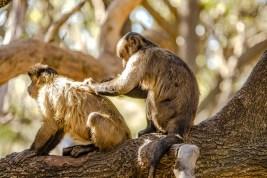 Südafrika 2019 1677 - Afrika - Ein Traum wurde wahr - urlaubsfotos, outdoor, offene-worte, non-commercial, naturfotos, natur, allgemein, alles, abseits-des-alltags -