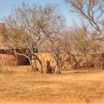 Südafrika 2019 181 - Die wilde Bestie ;-) - tierportraets, portraets, allgemein - Tierfotos, Hundeporträts, Hunde