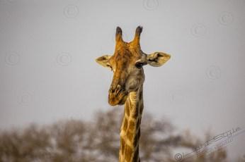 Südafrika 2019 2090 - Afrika - Ein Traum wurde wahr - urlaubsfotos, outdoor, offene-worte, non-commercial, naturfotos, natur, allgemein, alles, abseits-des-alltags -