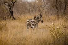 Südafrika 2019 2120 - Afrika - Ein Traum wurde wahr - urlaubsfotos, outdoor, offene-worte, non-commercial, naturfotos, natur, allgemein, alles, abseits-des-alltags -