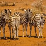 Südafrika 2019 2403 - Bewerbungsfotos , wichtig oder blankes Beiwerk - allgemein - Infos, Businessporträts, Businessfotos, Bewerbungsfotos