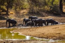 Südafrika 2019 2467 - Afrika - Ein Traum wurde wahr - urlaubsfotos, outdoor, offene-worte, non-commercial, naturfotos, natur, allgemein, alles, abseits-des-alltags -