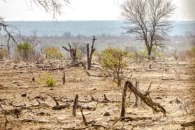 Südafrika 2019 2538 - Afrika - Ein Traum wurde wahr - urlaubsfotos, outdoor, offene-worte, non-commercial, naturfotos, natur, allgemein, alles, abseits-des-alltags -